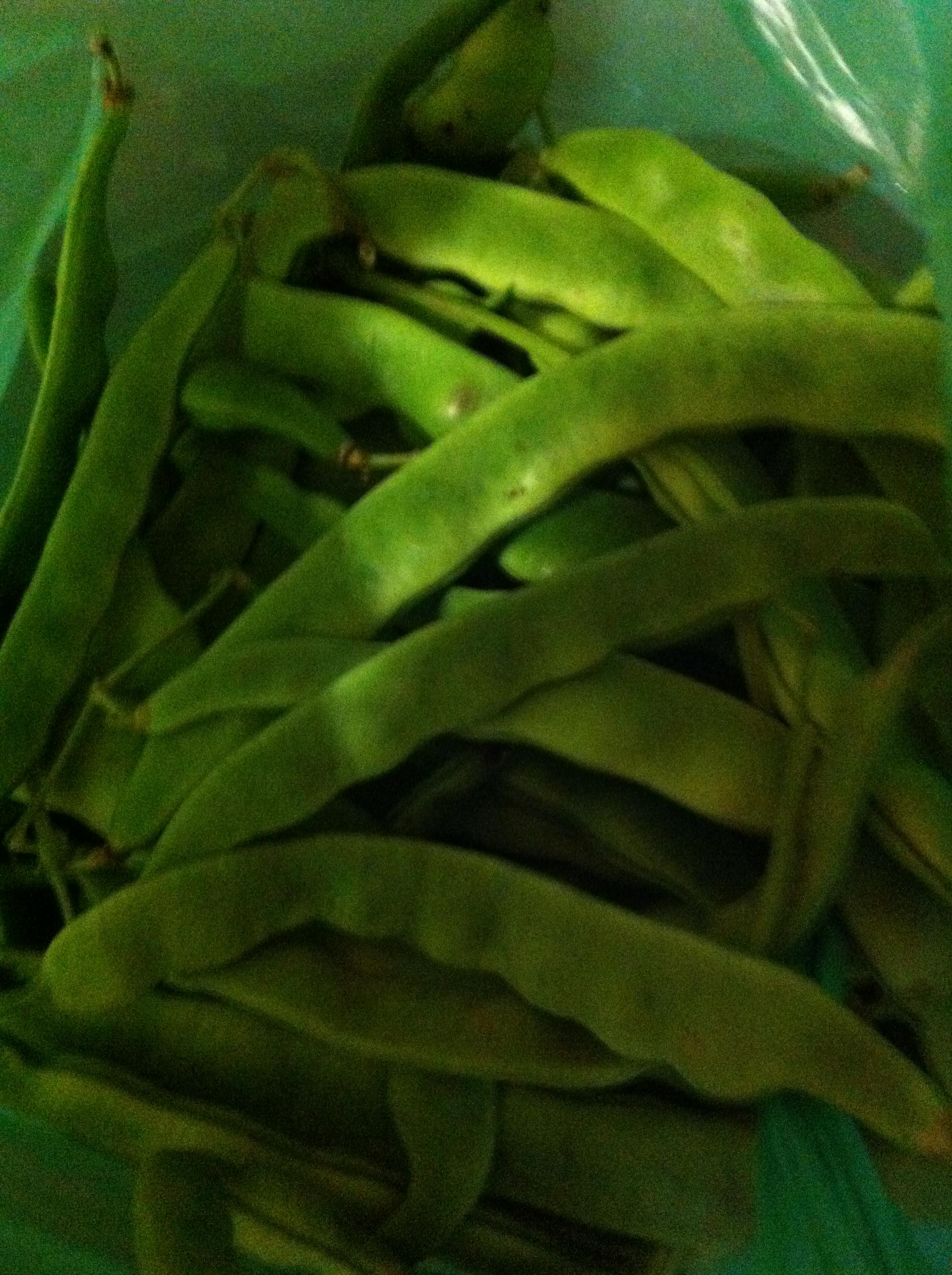 Jud as verdes del huerto conservarlas mejorando lo presente - Como hacer judias verdes ...
